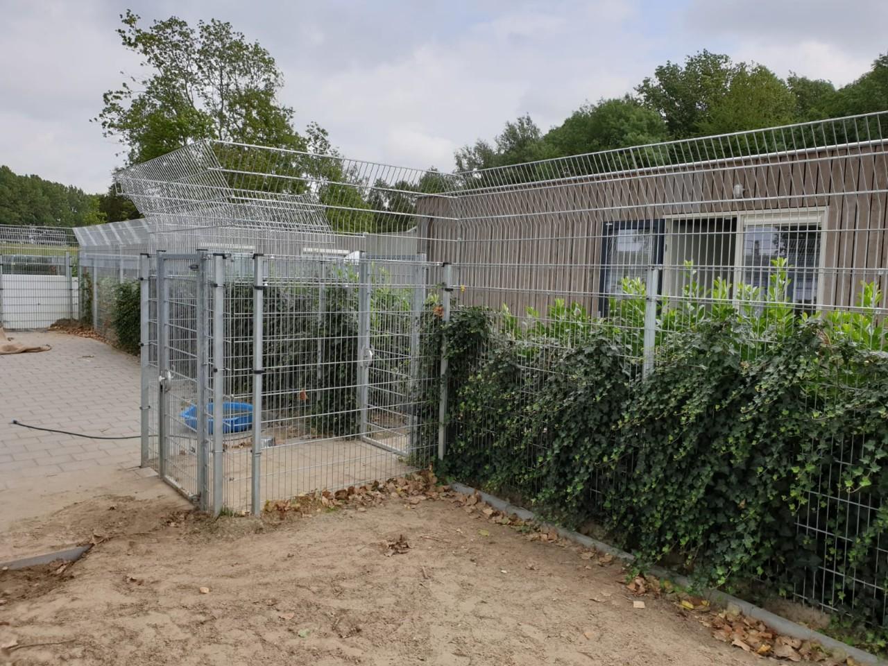 Dierenbescherming Spijkenisse  # (13)