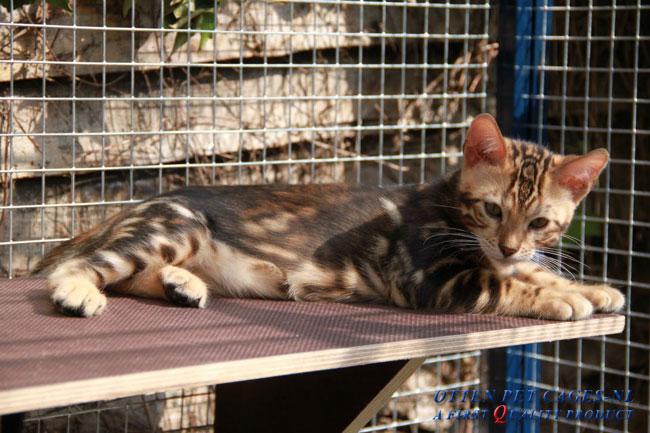 Kattenren aluminium #210 (5)
